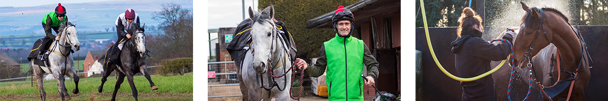Michael Dods : Racehorse Trainer